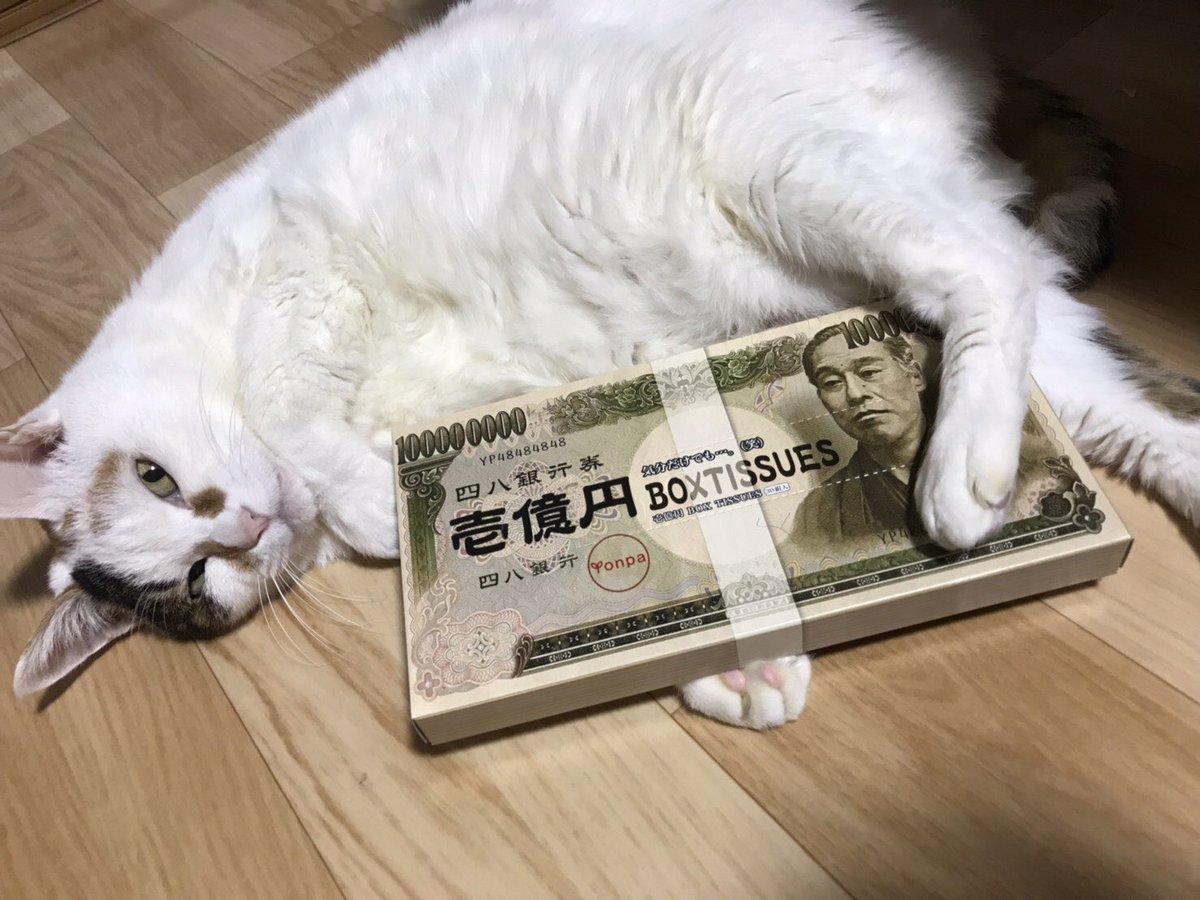 喵喵喵!2月22日是日本猫之日!来看看各种猫猫吧 4